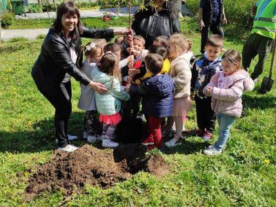 Красиви розови храсти ще ухаят вече в  Детска градина Радост